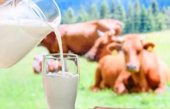Cow's milk has high nutritional value and low fat content